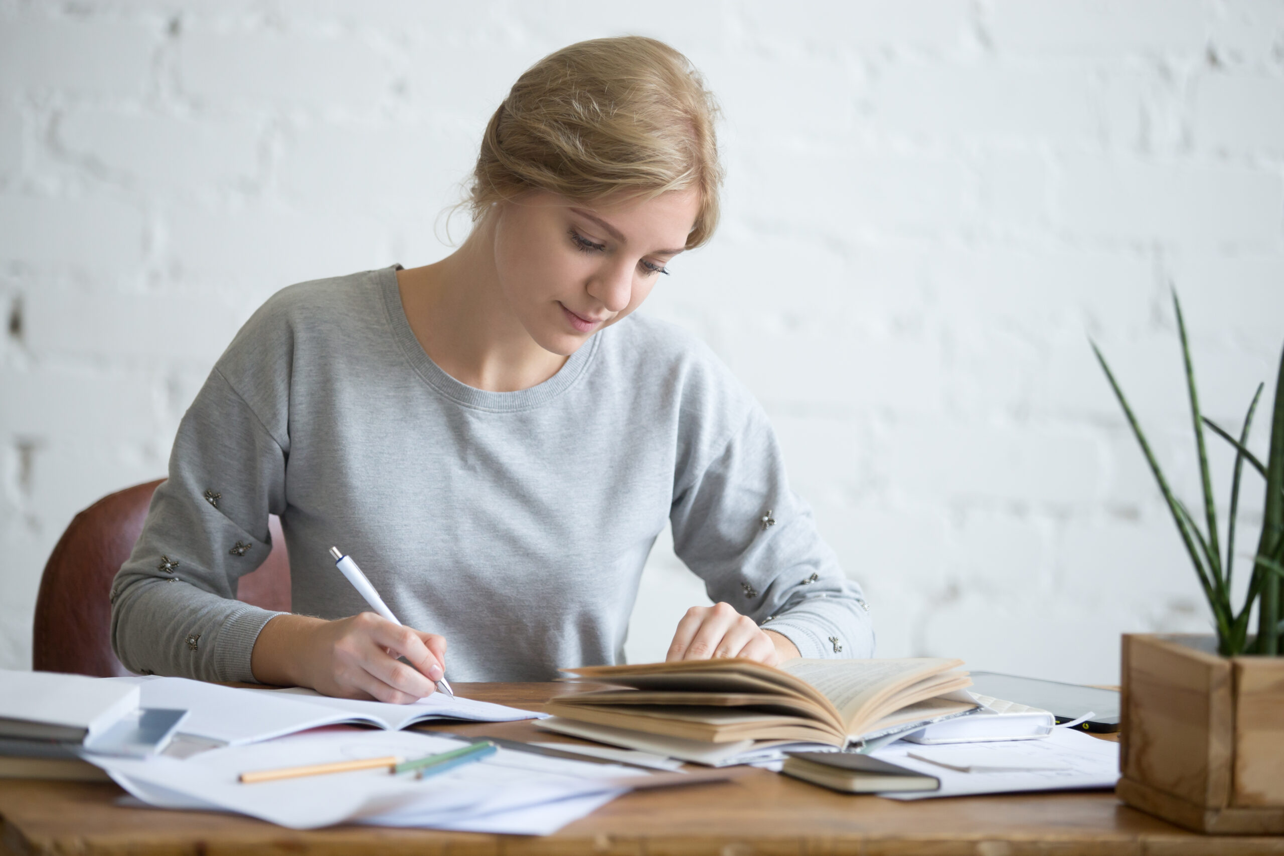assignment help in new york